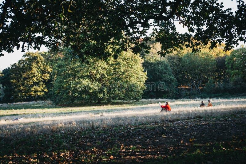 Frau in einem roten Pullover, der auf einem Gras, lesend an einem sonnigen Tag sitzt stockbild