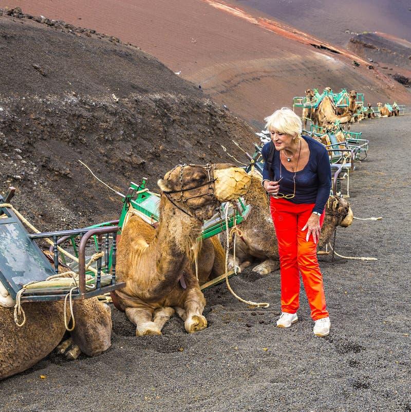 Frau ejnjoys, die zu den Kamelen nach einer Kamelfahrt suchen lizenzfreie stockbilder