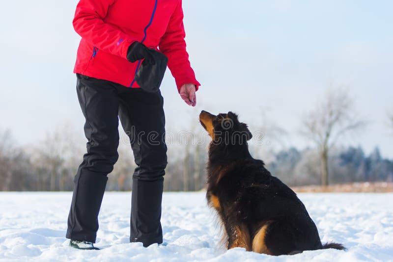 Frau geben einen Hund in der Schneezufuhr stockbilder