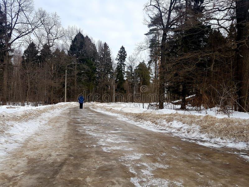 Frau geht, in einer grünen Ansicht des verschneiten Winters Waldvon der Rückseite Ski zu fahren stockbilder