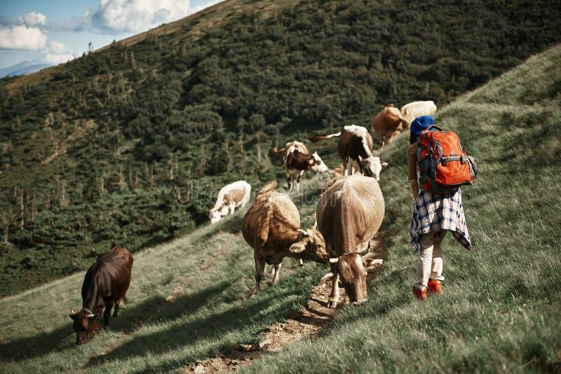Frau geht nahe Viehhochlandkoppel stockbild