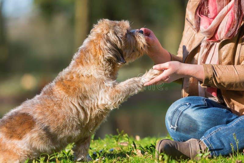 Frau gibt Hund eine Festlichkeit und erhält die Tatze stockbild