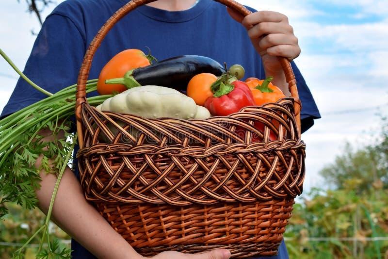 Frau hält die frisch ausgewählte Ernte des Gemüses lizenzfreies stockfoto