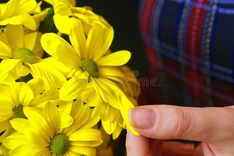 Frau hält eine gelbe Chrysantheme lizenzfreie stockfotos