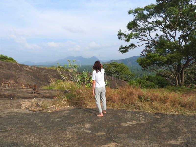 Frau, hintere Ansicht, die wilden Affen in der Natur, Dambulla, Sri Lanka betrachtet stockbilder