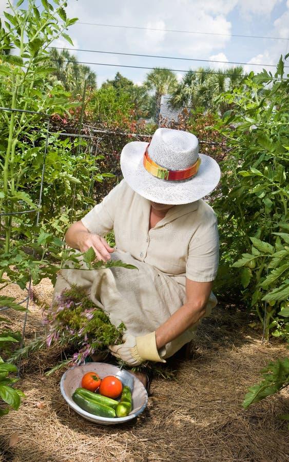 Frau in ihrem Gemüsegarten lizenzfreies stockfoto