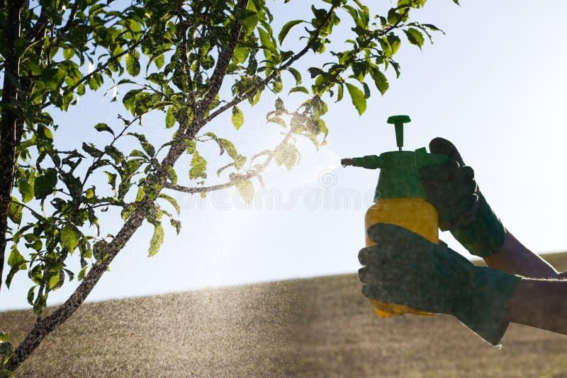 Frau mit dem Handschuhsprühen Blätter des Obstbaumes gegen Pflanzenkrankheiten und Plagen lizenzfreie stockbilder
