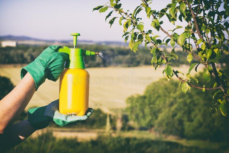 Frau mit dem Handschuhsprühen Blätter des Obstbaumes gegen Pflanzenkrankheiten und Plagen lizenzfreie stockfotografie