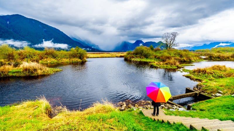 Frau mit einem Regenbogen farbigen Regenschirm unter dunklen Regenwolken an einem kalten Fr?hlingstag an den Lagunen von Pitt-Add stockfotografie