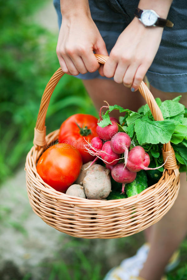 Frau mit Korb des Gemüses lizenzfreie stockfotografie
