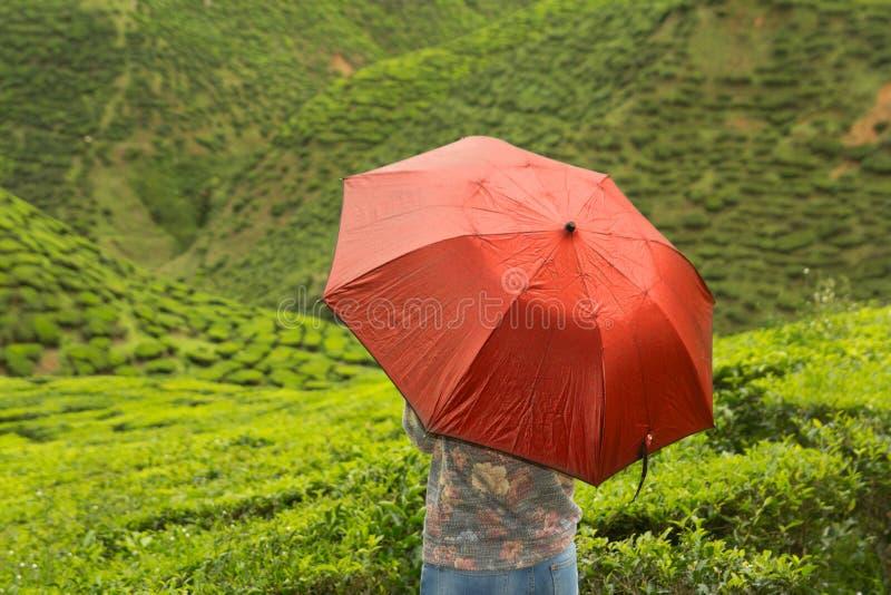 Frau mit Regenschirm auf Teeplantage lizenzfreies stockfoto