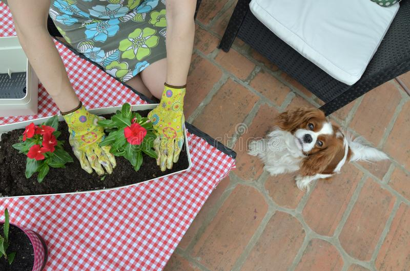 Frau Potting eine Blume stockfotografie