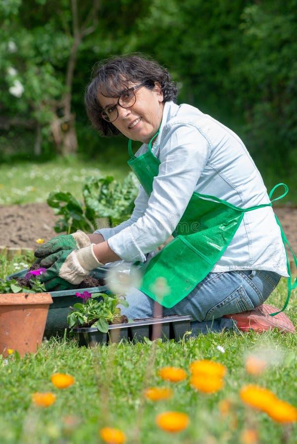 Frau Potting-Pelargonienblumen stockbilder