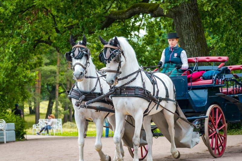Frau reiten den Pferdewagen bei Catherine Palace in St Petersburg, Russland stockfotografie