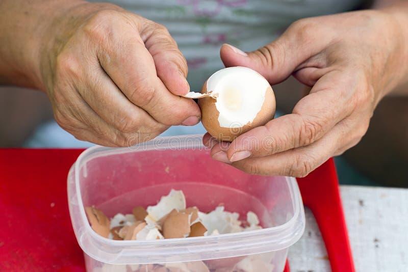 Frau säubert eine gekochte Hühnerei vom Oberteil lizenzfreie stockfotos