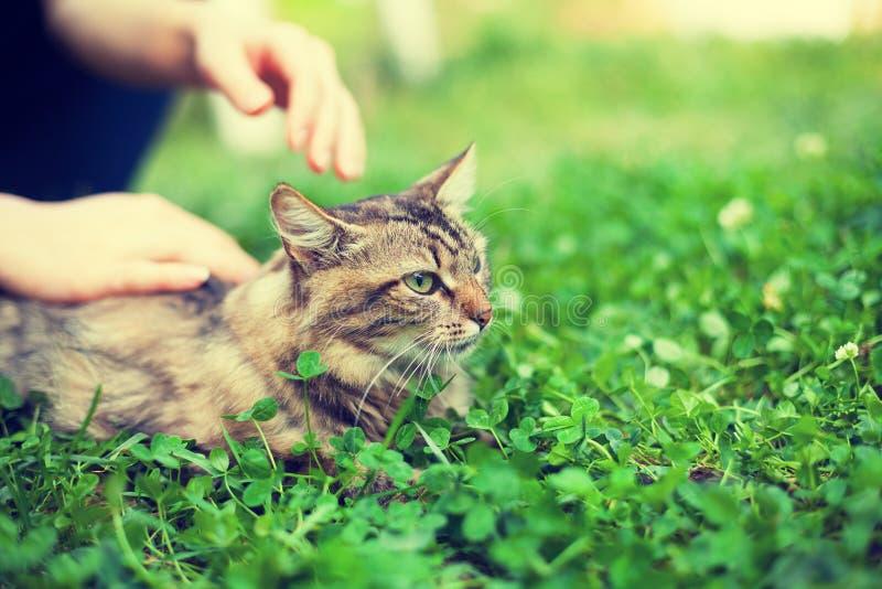 Frau streichelt Katze stockfoto