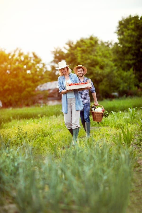 Frau und holendes Gemüse vom Garten stockfoto