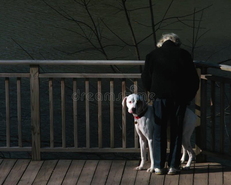 Download Frau und Hund stockbild. Bild von holz, hund, weiß, hündchen - 43687