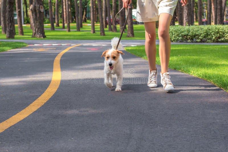 Frau und ihr Hund, die in den Park laufen stockfoto