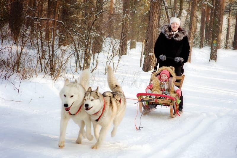 Frau und kleines Mädchen auf einem Pferdeschlitten reiten mit sibirischem Husky lizenzfreie stockfotos