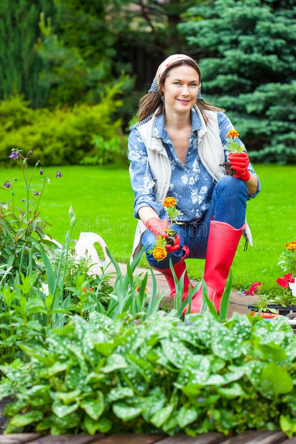 Frau von mittlerem Alter, die Blumen im Blumengarten pflanzt lizenzfreies stockfoto