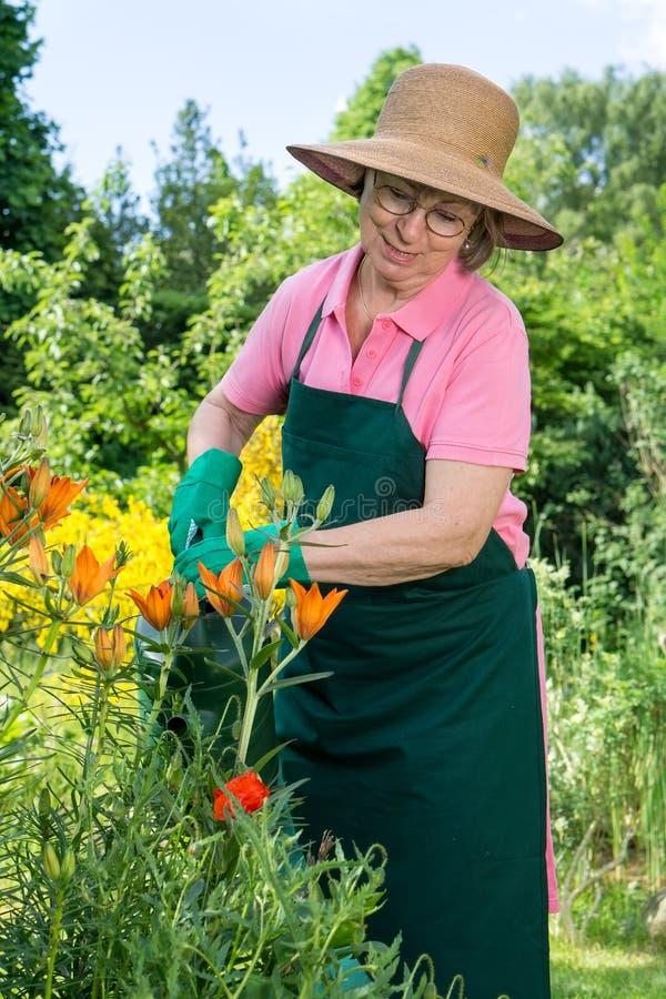 Frau von mittlerem Alter, die orange Lilien wässert lizenzfreie stockbilder