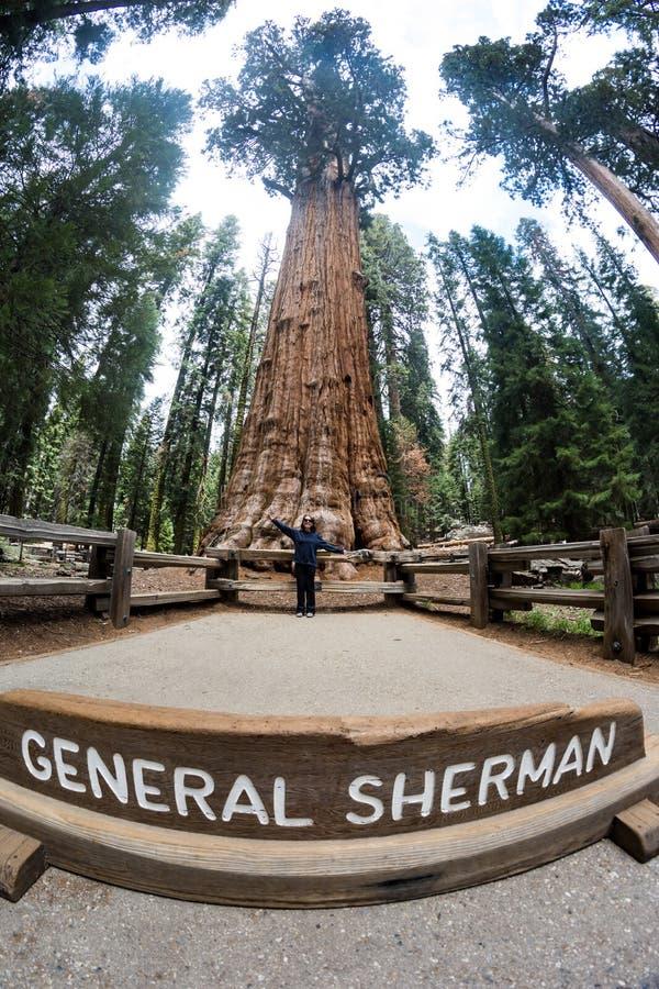 Frau wirft vor dem allgemeinen Sherman-Baum im Mammutbaum-Nationalpark auf stockbilder