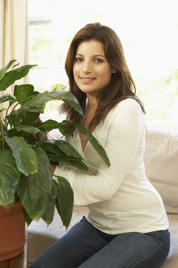 Frau zu Hause, die um Houseplant sich kümmert stockfoto