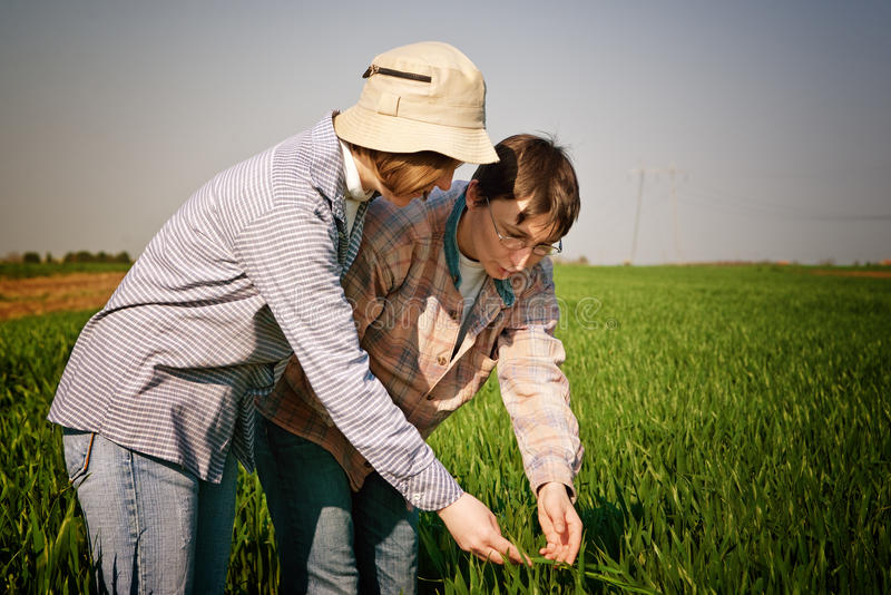 Frauen auf dem Weizengebiet stockbild