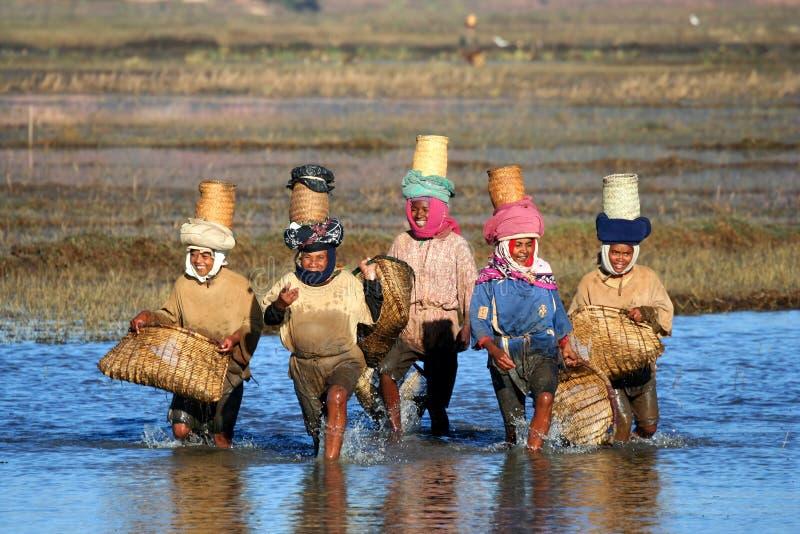 Frauen, die an einem Feld arbeiten lizenzfreies stockbild