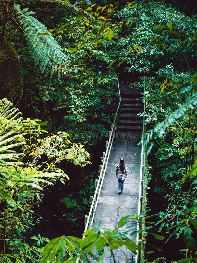 Frauen, die in einem tropischen Dschungel auf einer Brücke übernachten Wasserfall in Bali stockfotografie