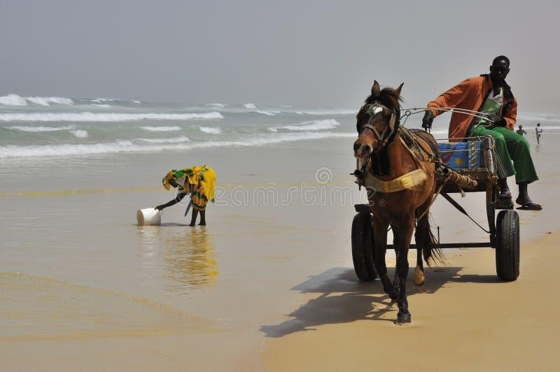 Frauen am Ozean und Pferd am angetriebenen Chariot stockbild