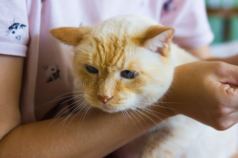 Frauen säubert Katzenohren stockbild
