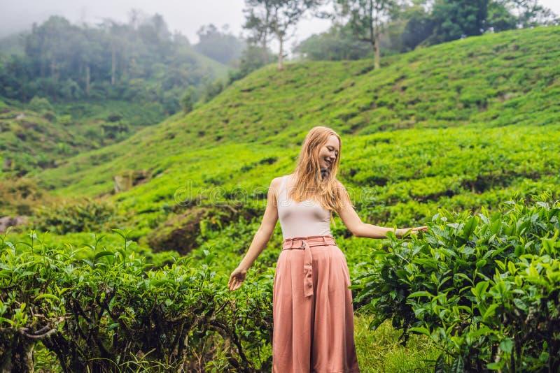 Frauen touristisch an einer Teeplantage Natürliche vorgewählte, frische Teeblätter im Tee bewirtschaften in Cameron Highlands, Ma stockbilder
