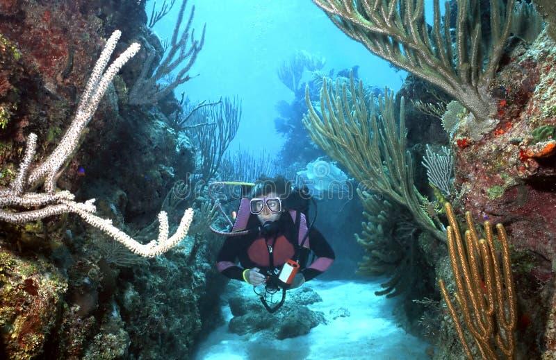Frauen-Unterwasseratemgerättaucher in Roatan lizenzfreie stockfotografie