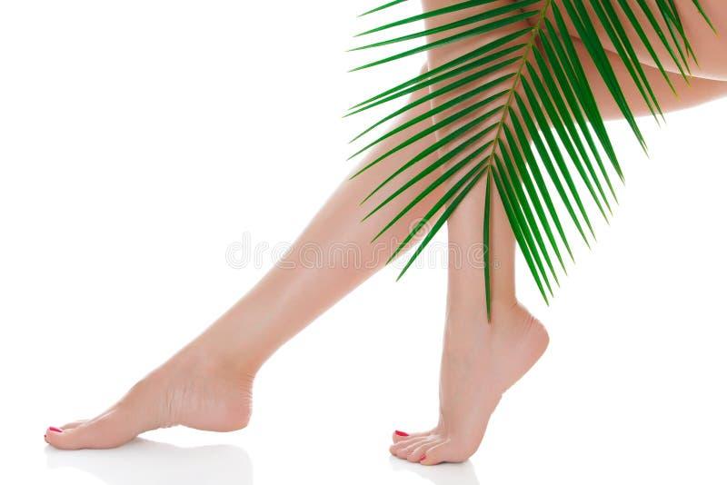 Frauenbeine und grüner Palmenast stockbild