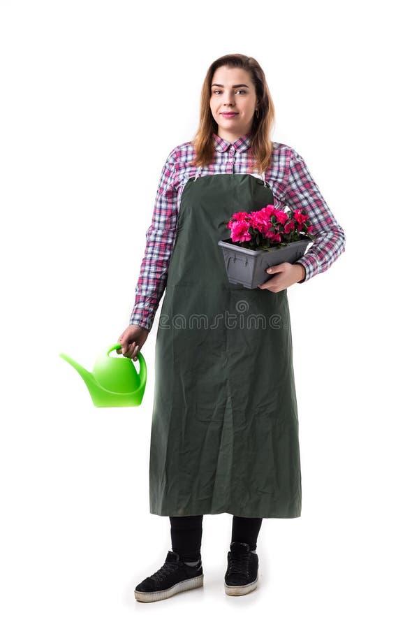 Frauenberufsgärtner oder -florist im Schutzblech, das Blumen in einem Topf und in Gartenarbeitwerkzeugen lokalisiert auf weißem H lizenzfreie stockfotos