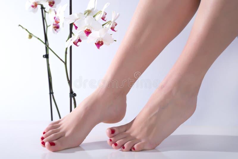 Frauenfüße mit rotem Nagellack und weißer Orchideenblume im Hintergrund in der Schönheit und im Badekurortstudio lizenzfreie stockfotos