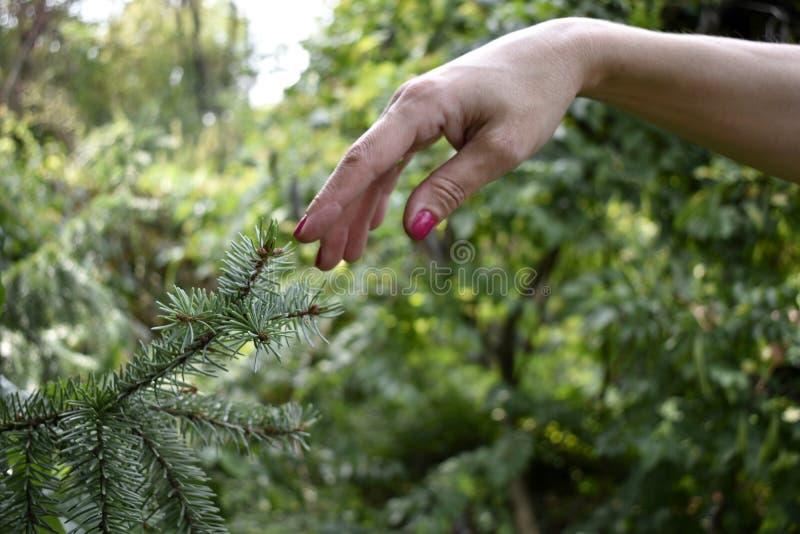 Frauenfinger, der Baumast berührt stockbild