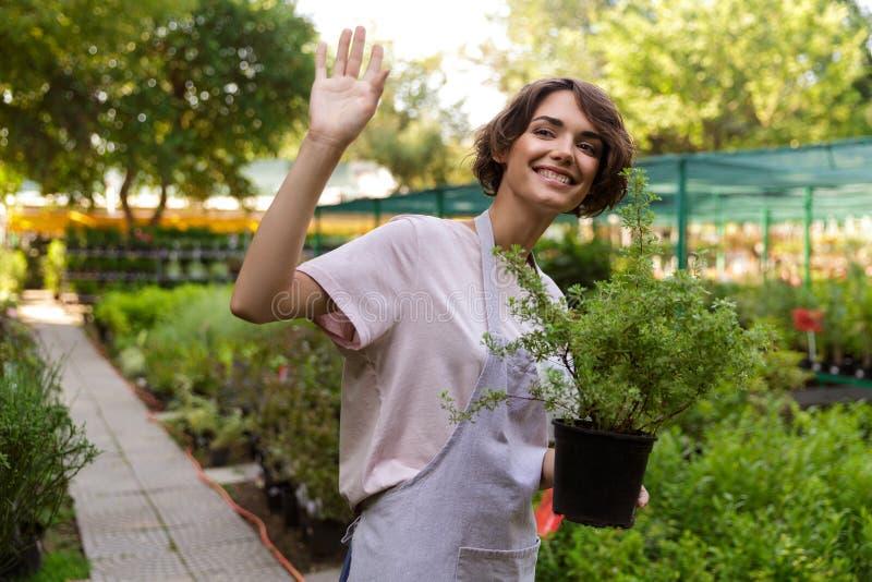 Frauengärtner, der über Blumenanlagen im Gewächshaus hält Anlagen steht stockfotos
