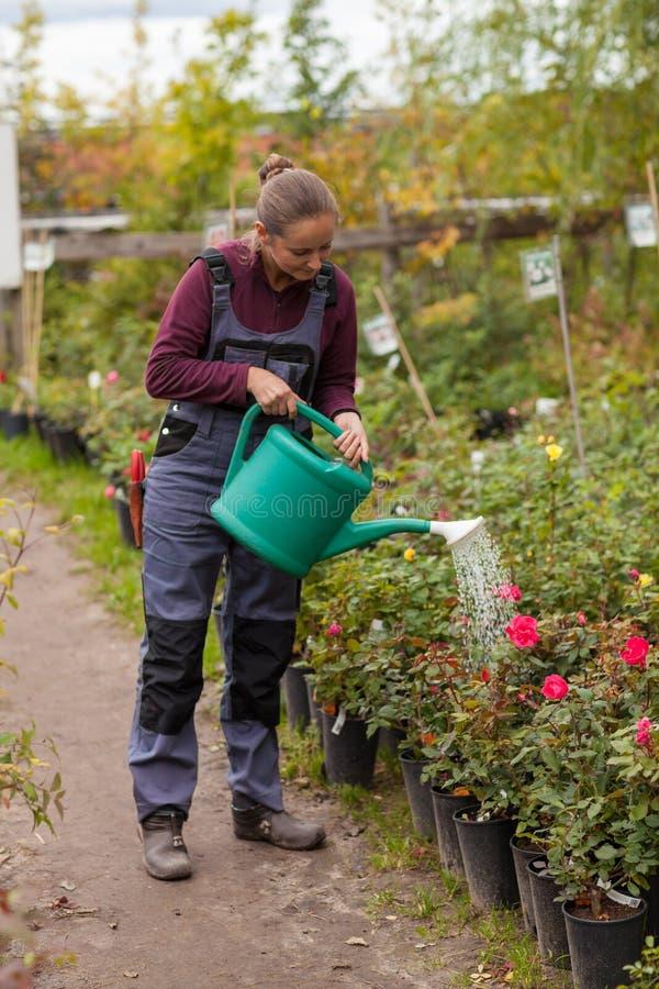 Frauengärtner, der die Blumen im Garten wässert stockbilder