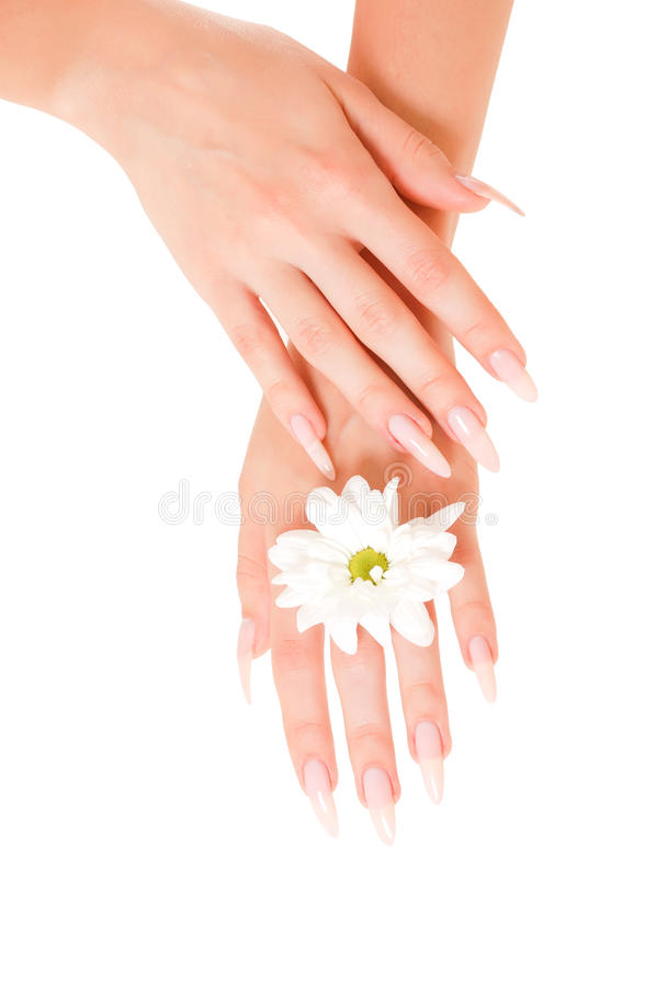 Frauenhände mit Blumen lizenzfreie stockfotos