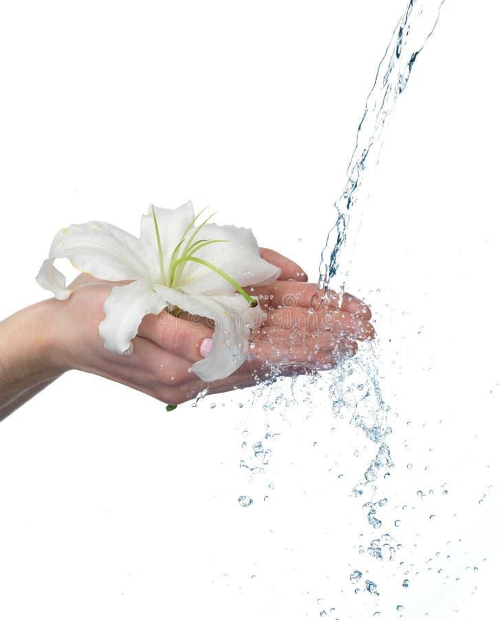 Frauenhände mit Lilie und Strom des Wassers. lizenzfreies stockbild