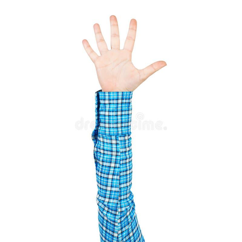 Frauenhand in der blauen karierten Hemdvertretungspalme lizenzfreie stockfotos