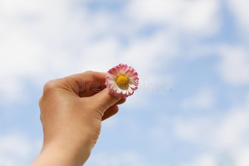 Frauenhand, die ein Gänseblümchen gegen den blauen Himmel mit Wolken, Freiheit, Frieden, Hoffnung, Vertrauen und Reinheit hält lizenzfreie stockfotos