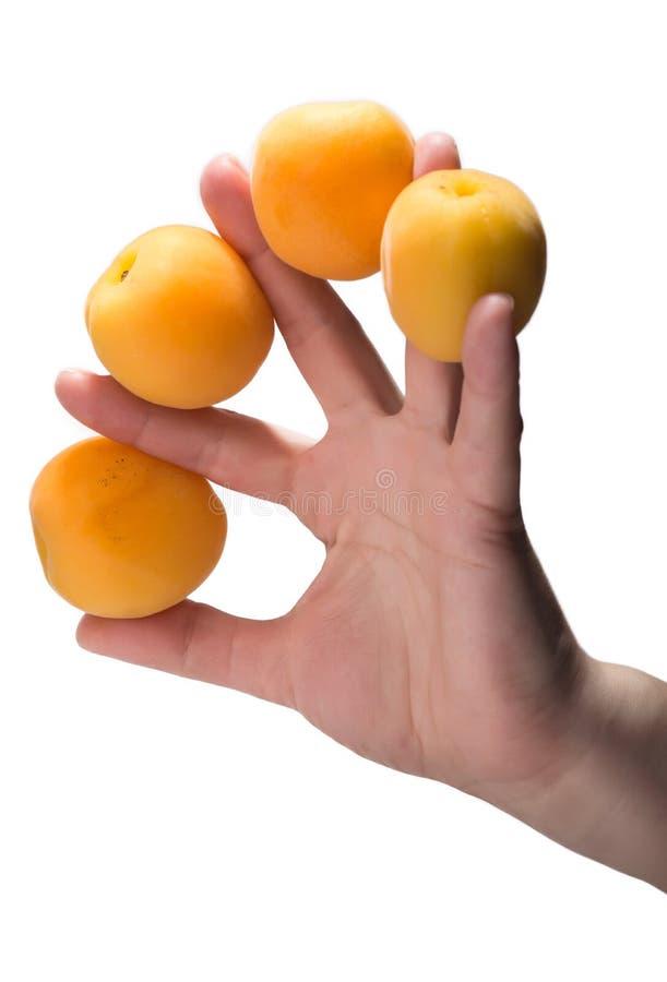 Frauenhand, die vier Aprikosen hält lizenzfreie stockfotografie