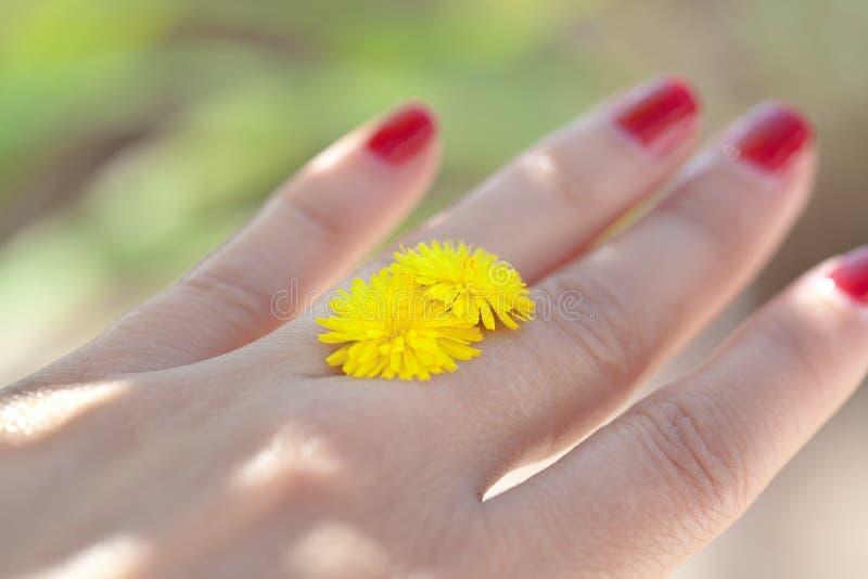 Download Frauenhand Mit Gelber Blume Stockfoto - Bild von land, nana: 90232050