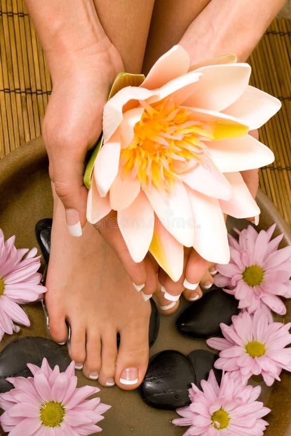 Frauenholding waterlily stockfotos