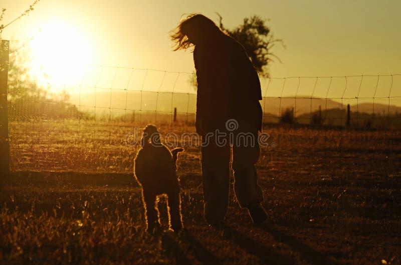 Frauenhund der besten Freunde der Schattenbilder, der Sonnenuntergangland des goldenen Glühens geht stockfoto