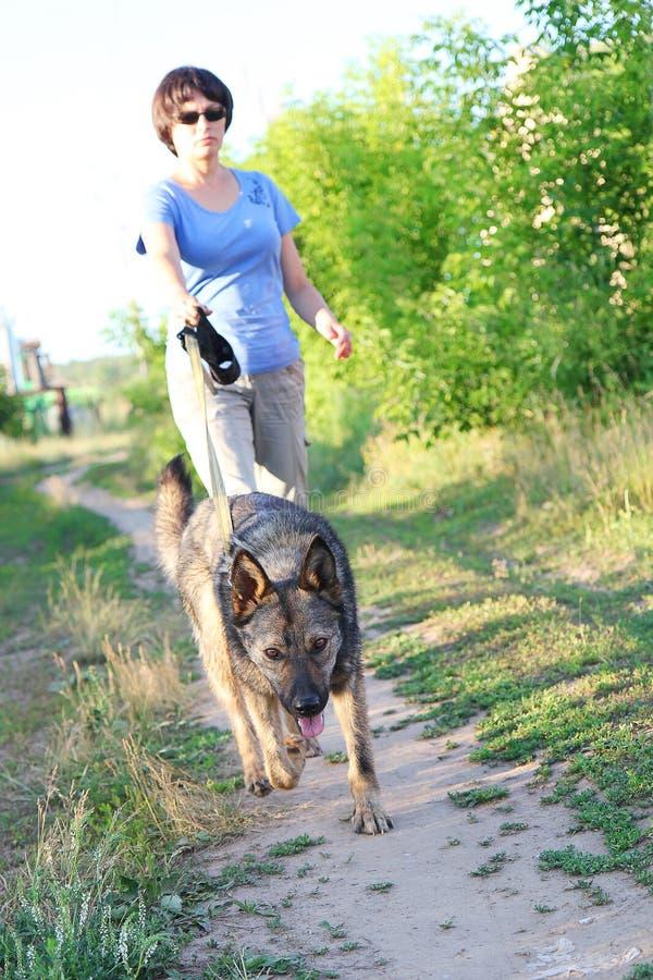 Frauenläufer, der mit Hund auf Landstraße in der Sommernatur läuft stockfoto